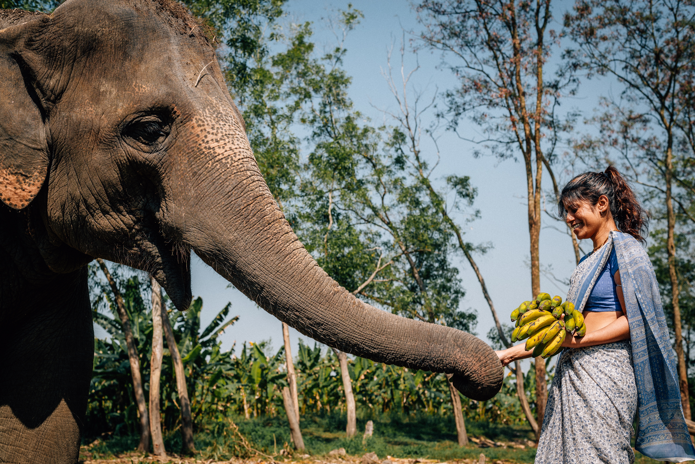 Free photo: Animals in Jungle - Animal, Deer, Jungle - Free Download - Jooinn